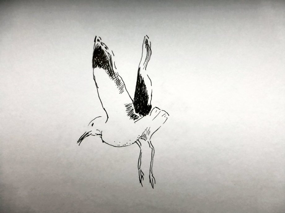Oct01-Swift